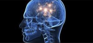 Neurociència cognitiva